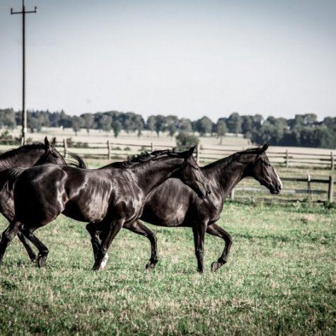 konie (4)